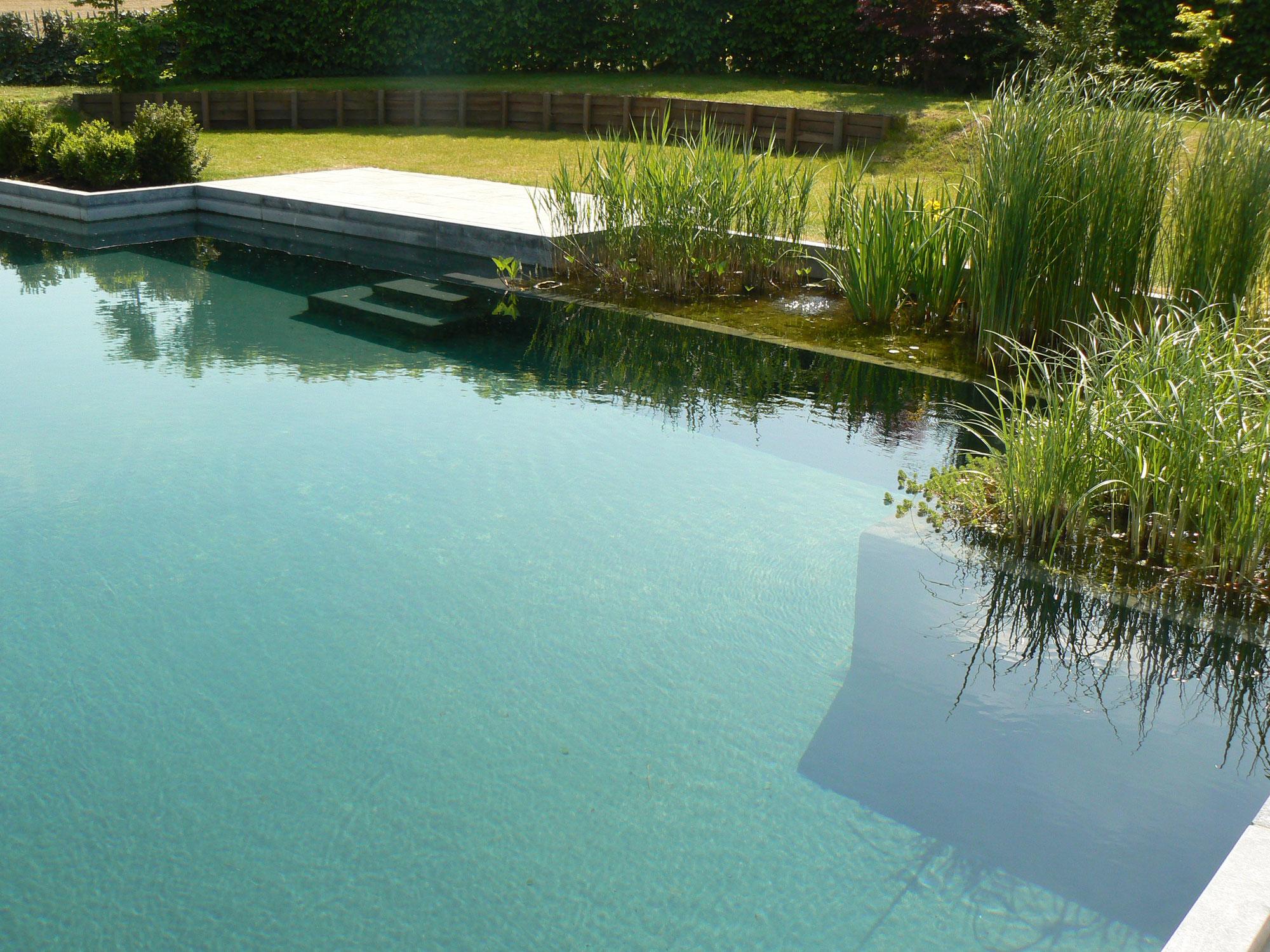 piscine naturelle plan d 39 eau et lagunage water garden. Black Bedroom Furniture Sets. Home Design Ideas