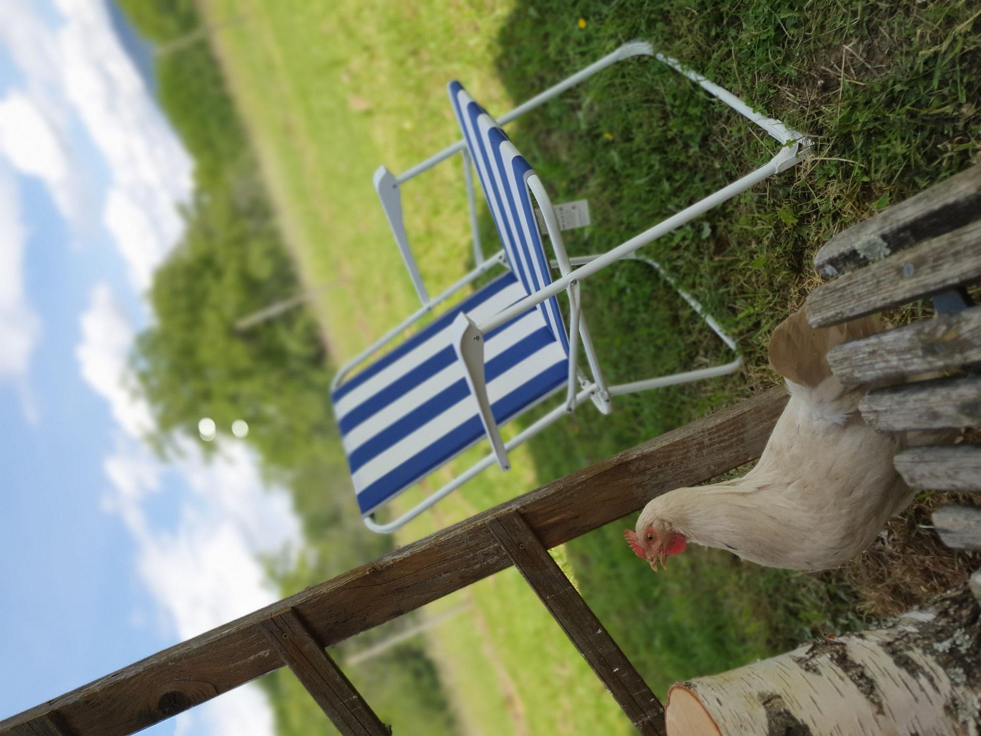 Hühner im Sommer...