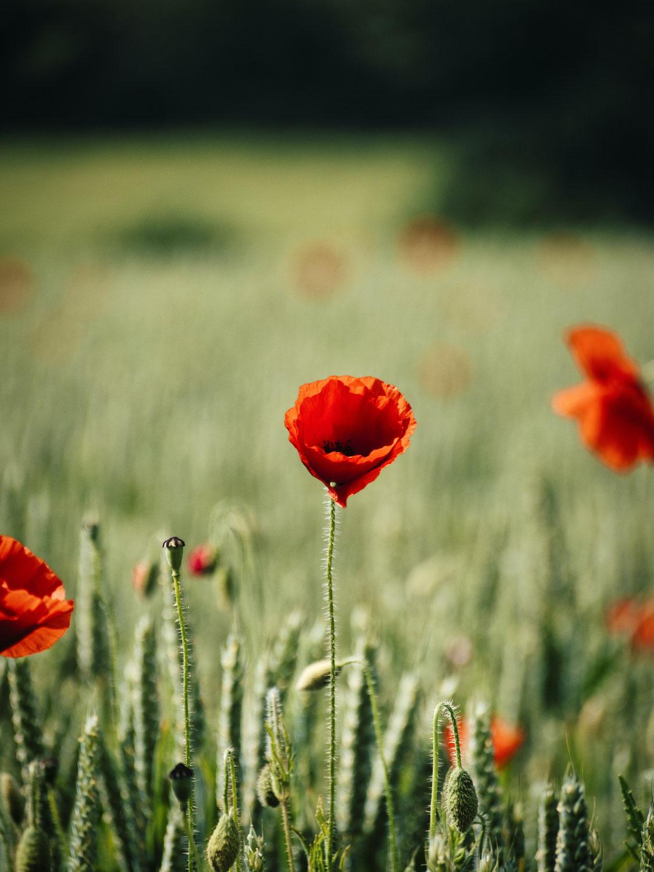 あなたの心の傷は、人によって癒され、人のあたたかさを改めて知るための旅路
