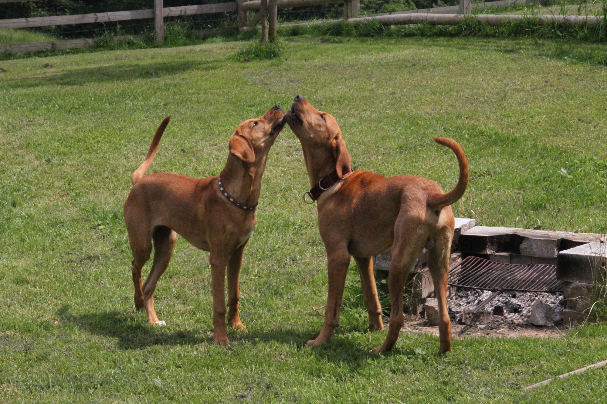 Bruder und Schwester beim Toben - Ben ❤️ und Baily ❤️