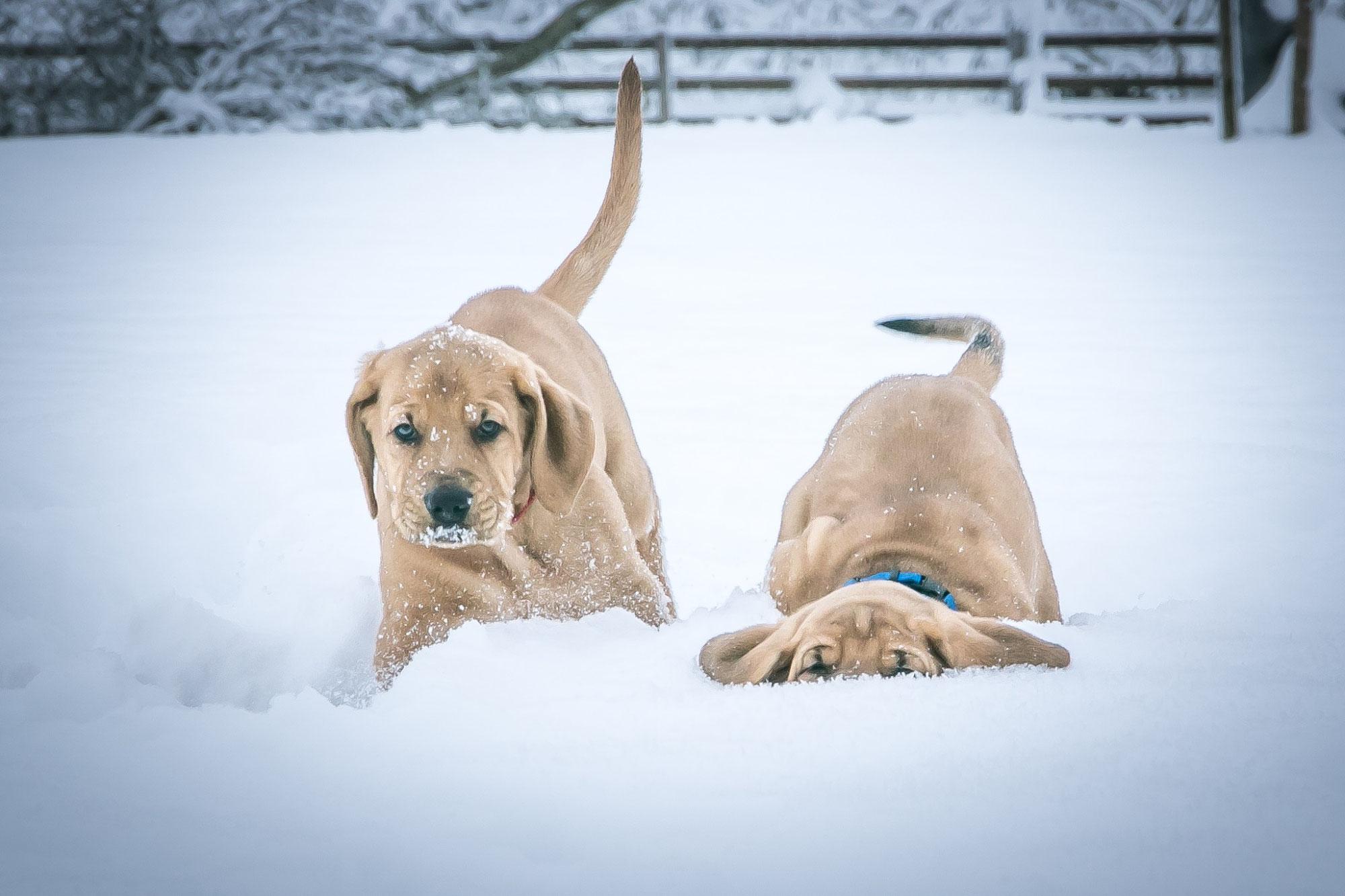 Das B-Team hat Spass im Schnee ❤️