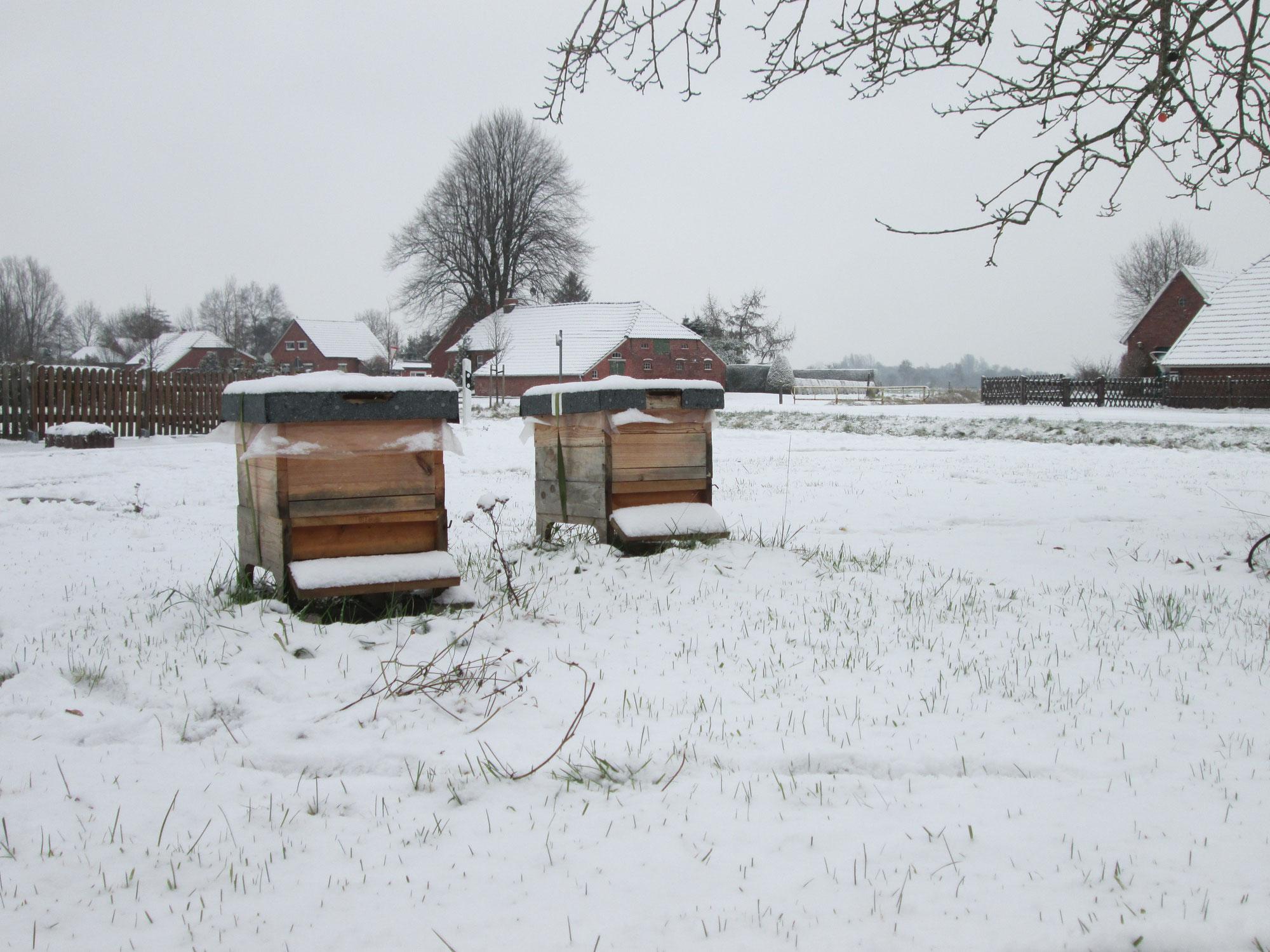 Spuren im Schnee: Bienen vor Fressfeinden schützen!