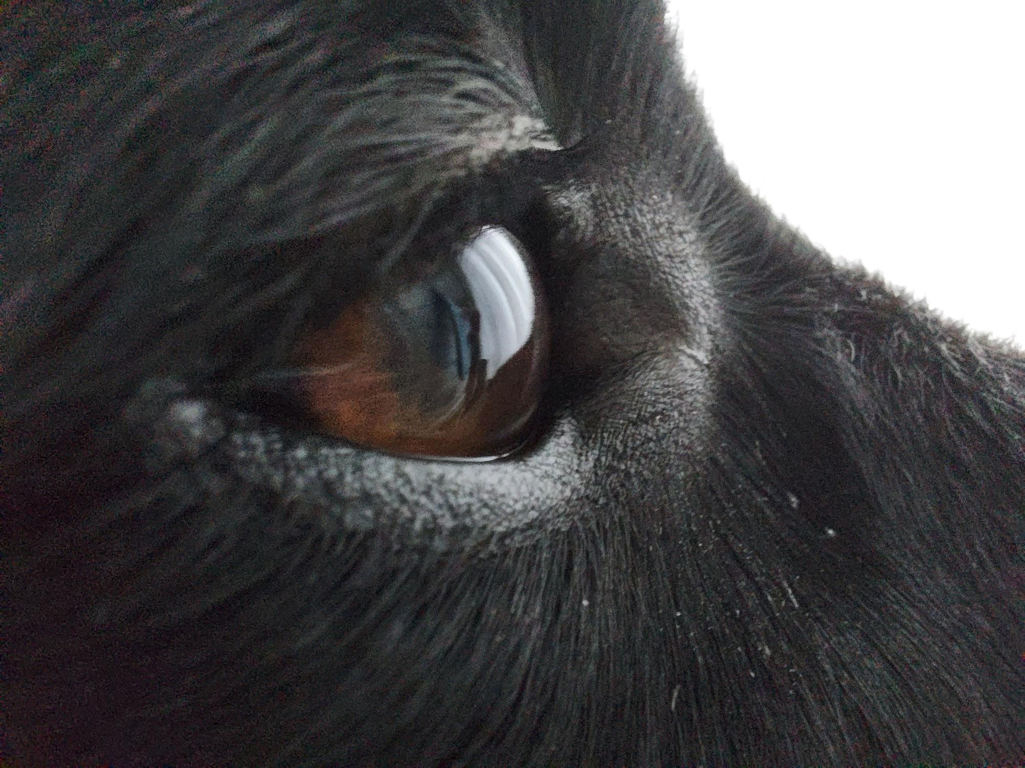 Natuurgeneeskunde voor dieren met  oogproblemen
