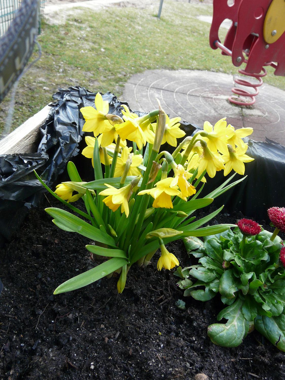 Auf einmal ist der Frühling da