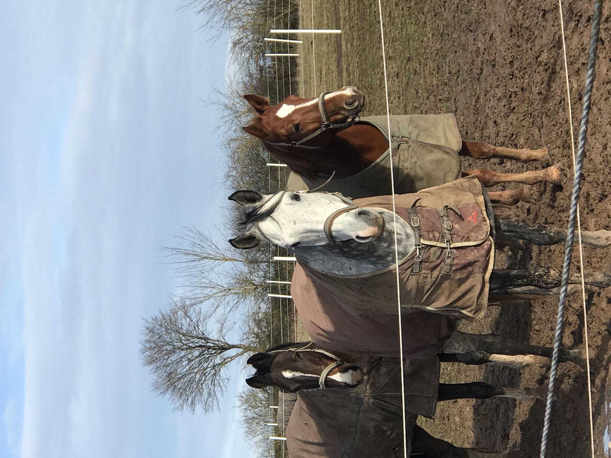 Wie viel Koppel braucht (m)ein Pferd?
