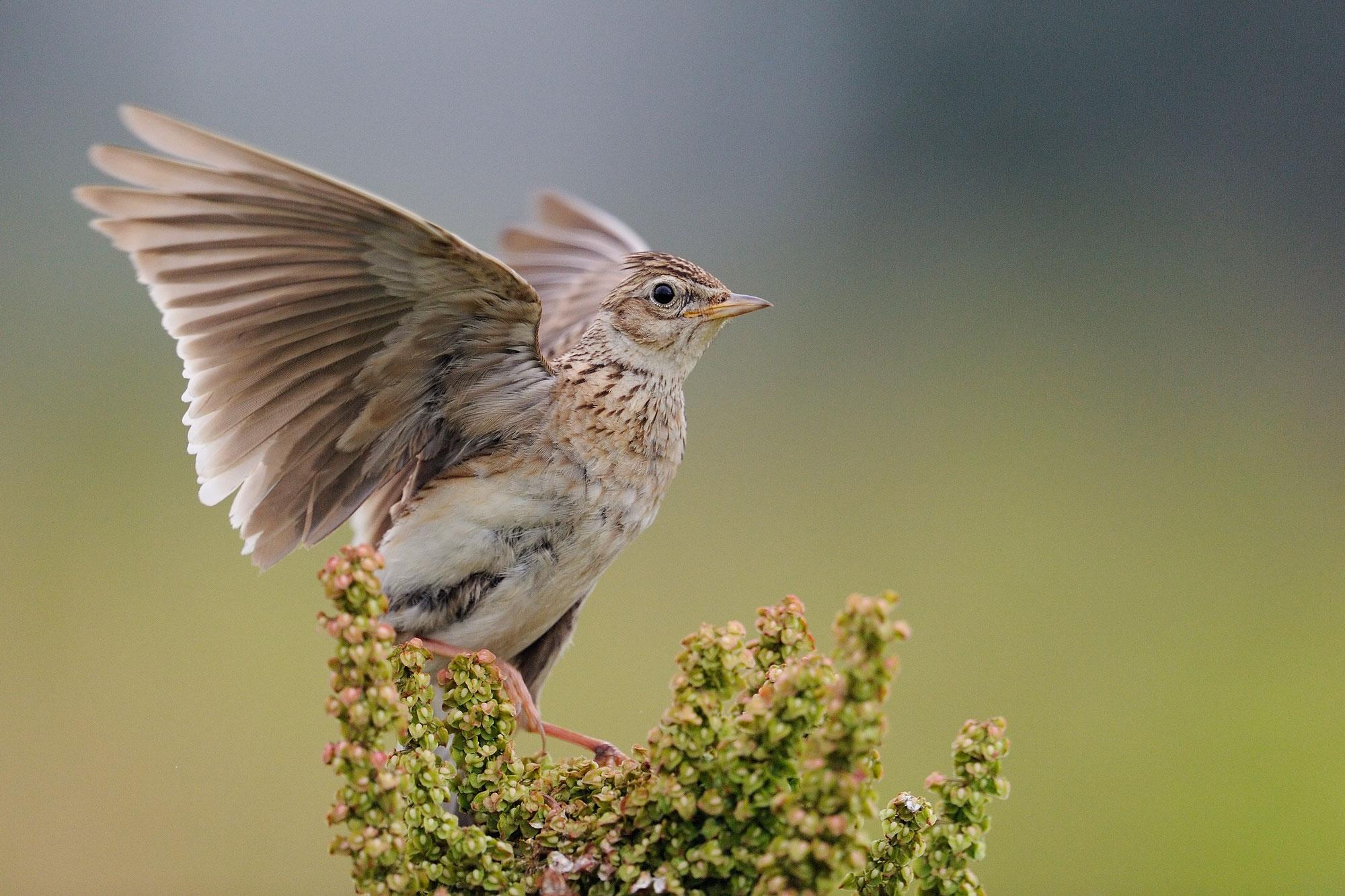 NABU und LBV: Der Vogel des Jahres 2021 ist das Rotkehlchen