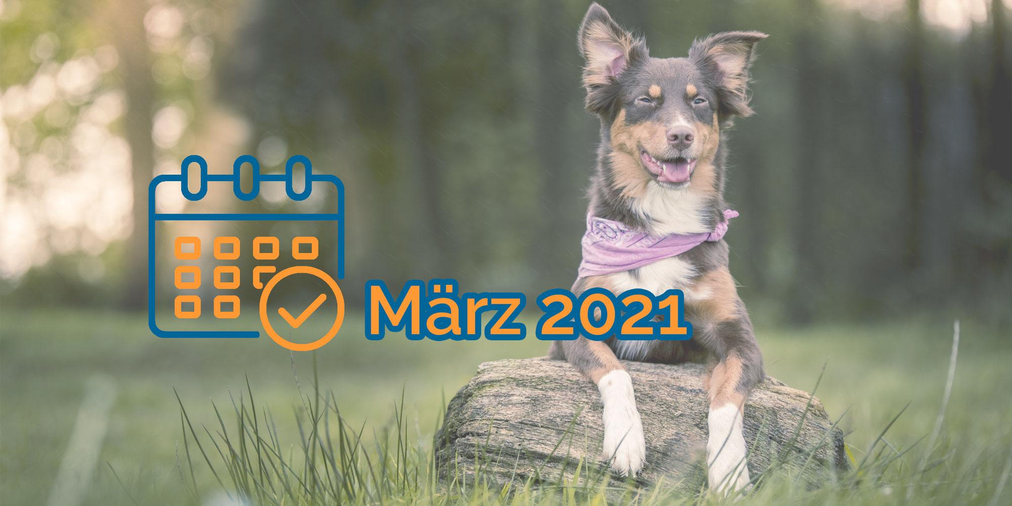 Nächste Termine kompakt (März 2021)
