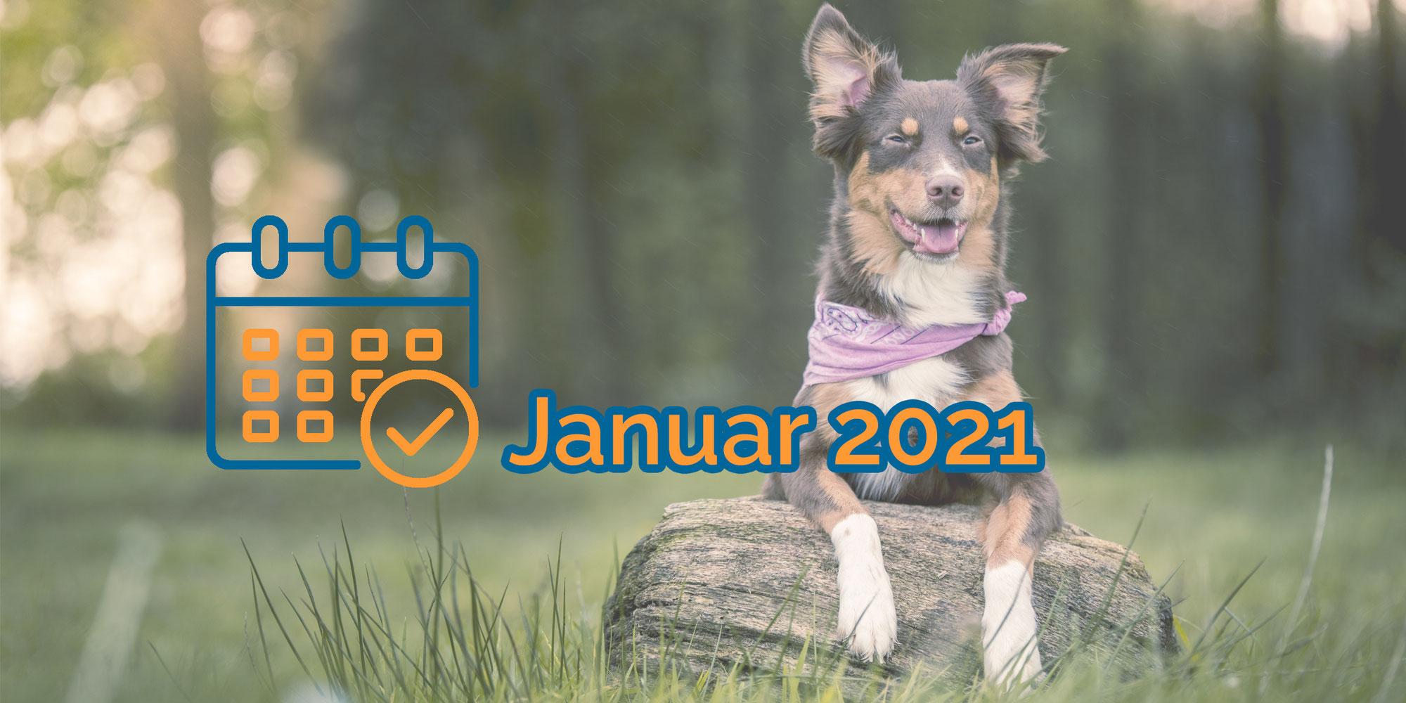 Nächste Termine kompakt (Januar 2021)