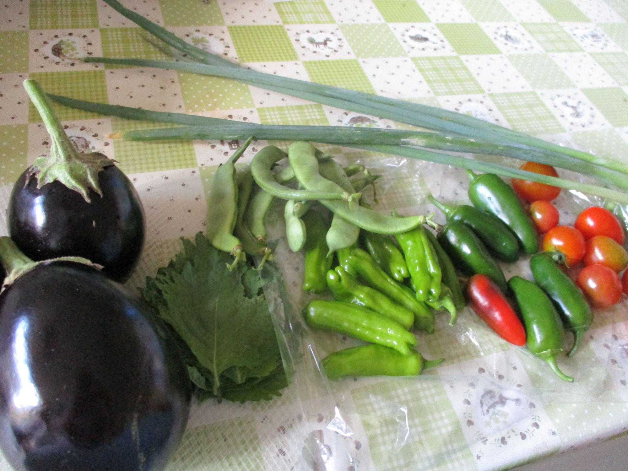 野菜採れました!