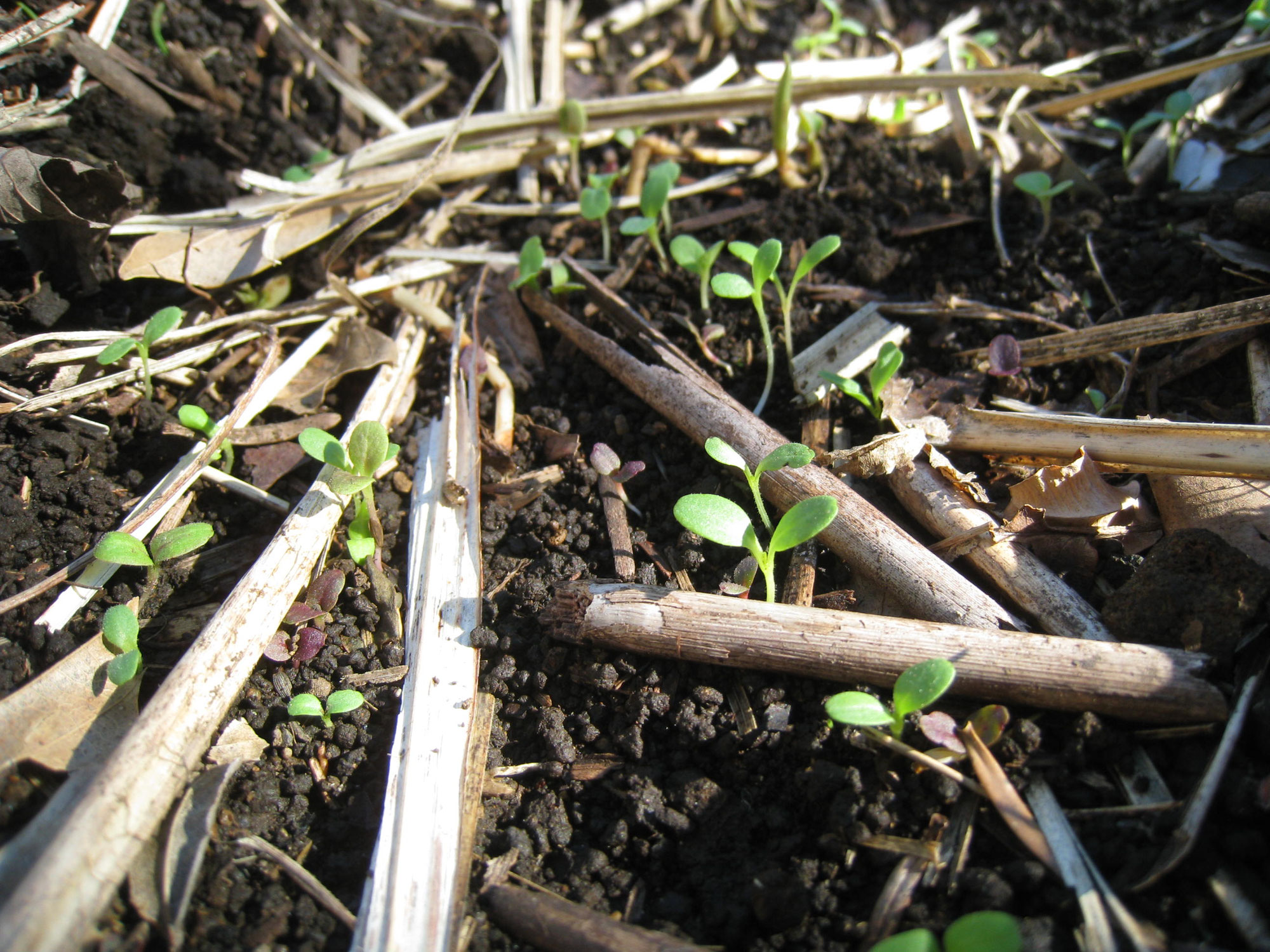健やかな土 と 健やかな場 ~ Wet&Dry