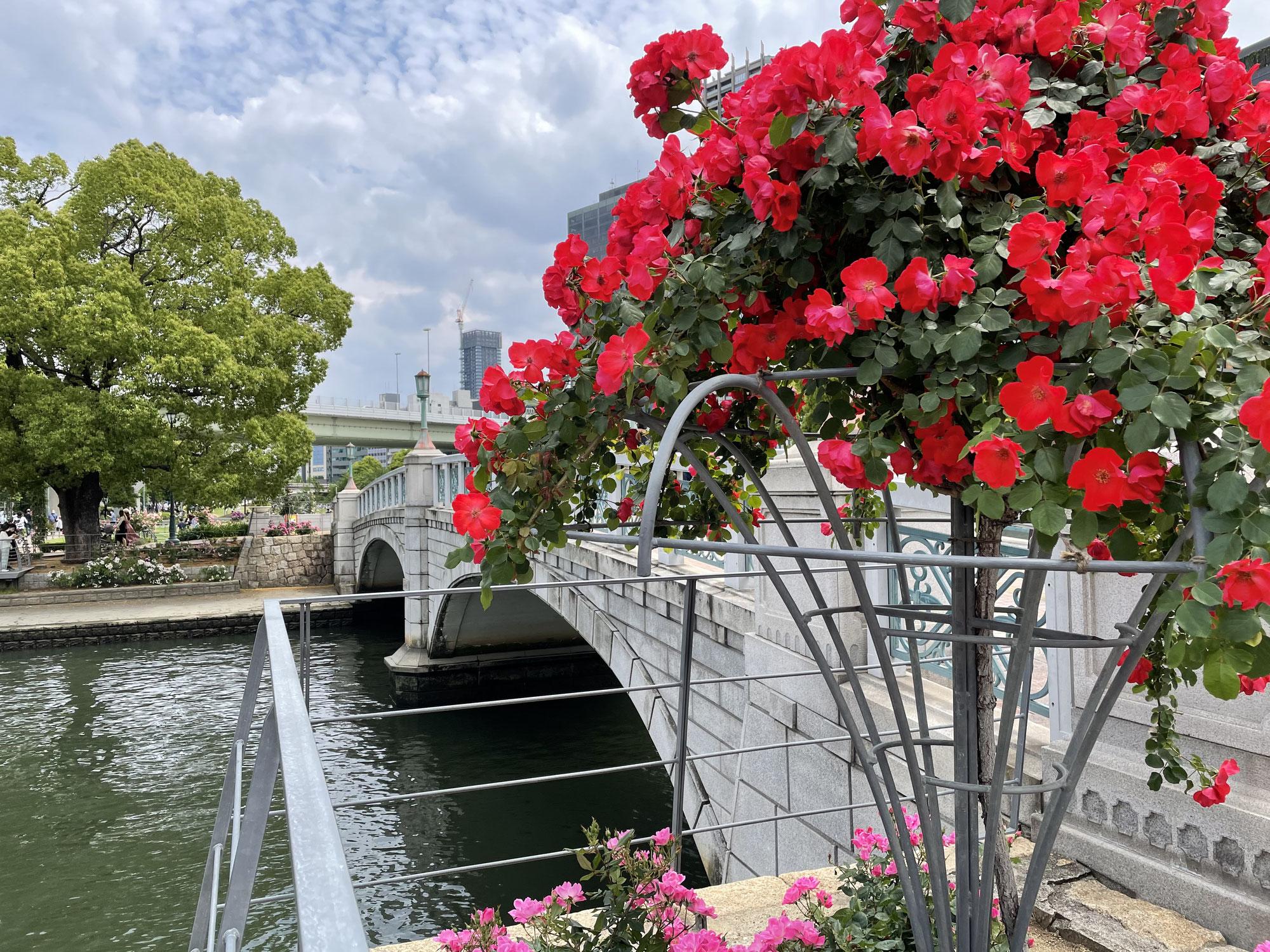 中之島の薔薇園が綺麗な件