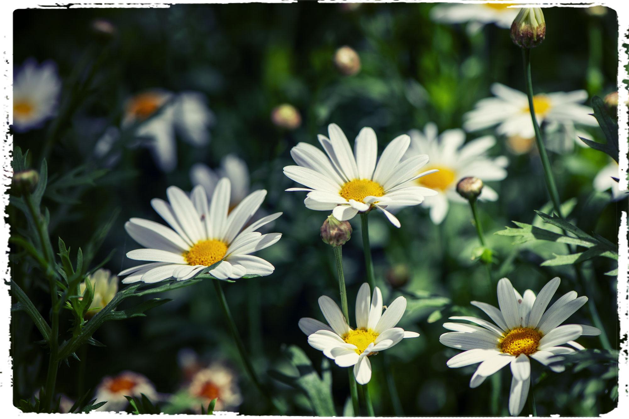 - Ayurvedische Empfehlungen für den Frühling -