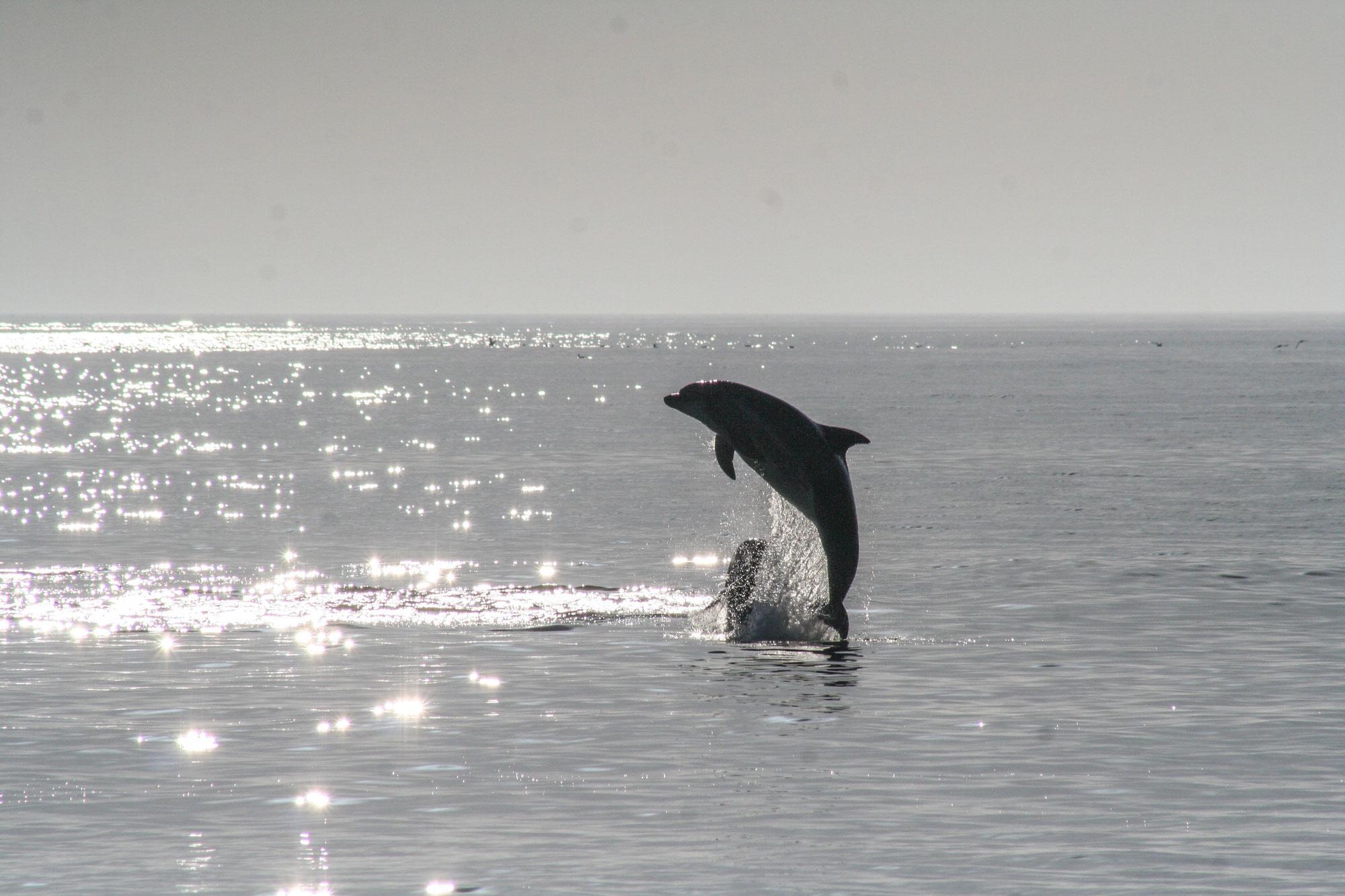 琵琶湖にイルカがとんだ日