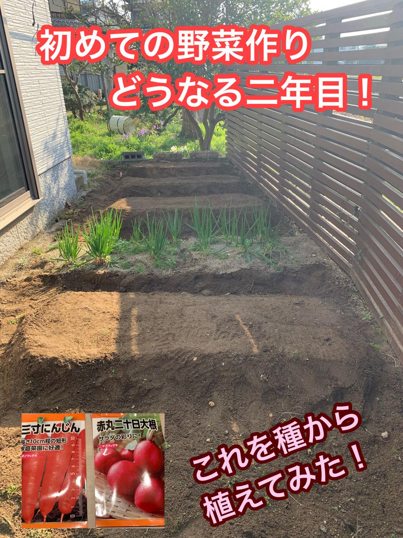ど素人野菜作り!2年目スタート!