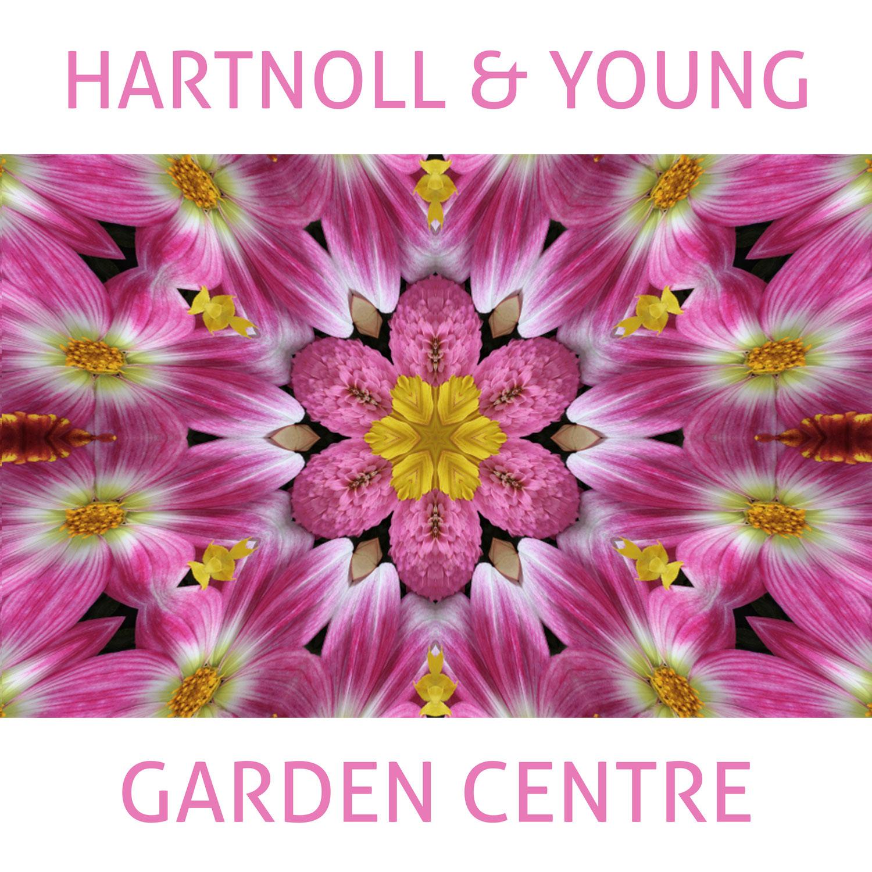 Hartnoll & Young