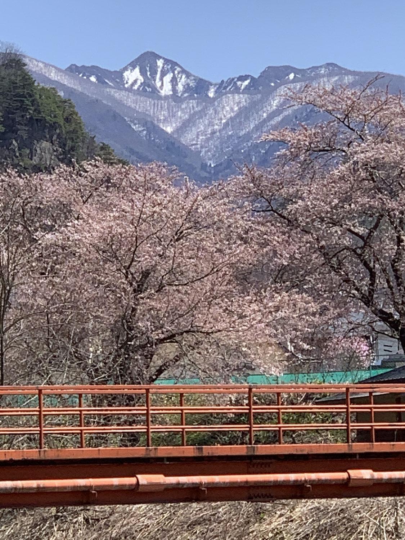 ベーテル花ブログ 17 春繚乱