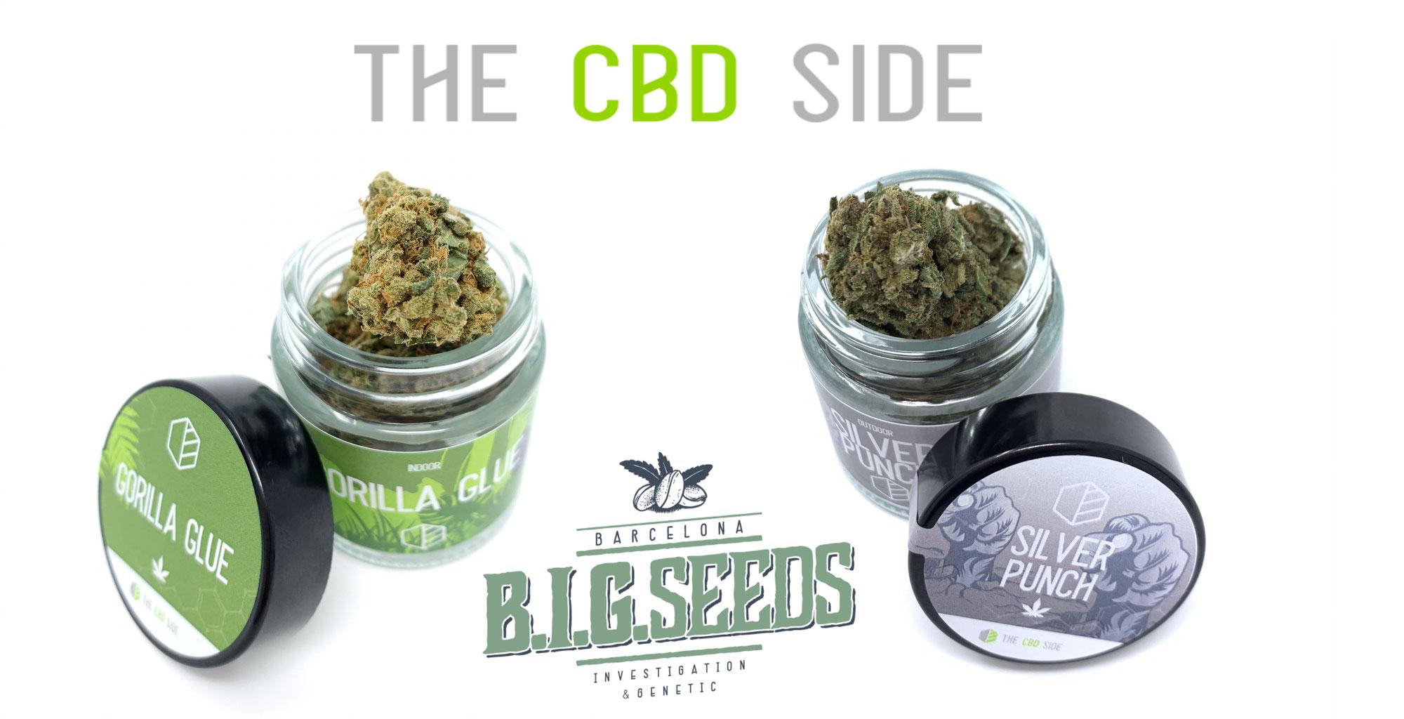 BIG Seeds: semillas y cogollos CBD