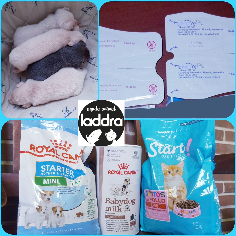 Donación para gatitos recogidos por rescatista y alimentadora