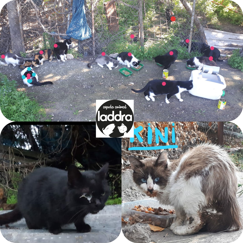 Ayuda para Colonias Felinas de Calypo
