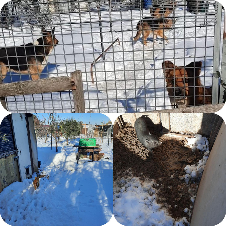 Ayuda a animales aislados por la nieve