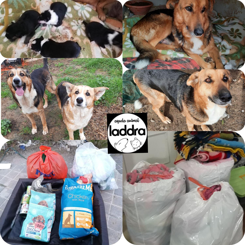 Donación para animales necesitados de particular