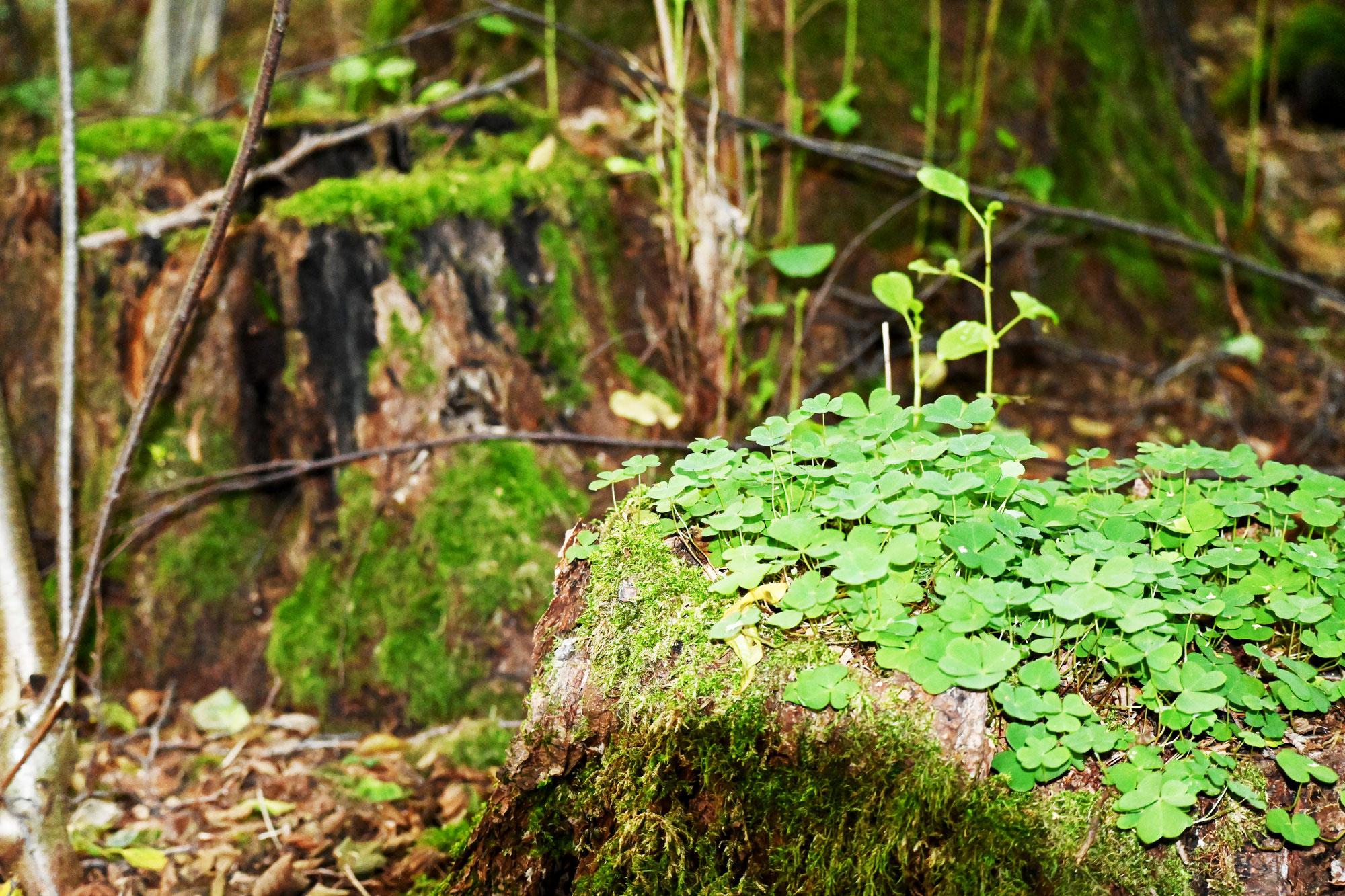 Wie wirkt der Wald auf das menschliche Hormon- und Nervensystem sowie auf die Psyche?