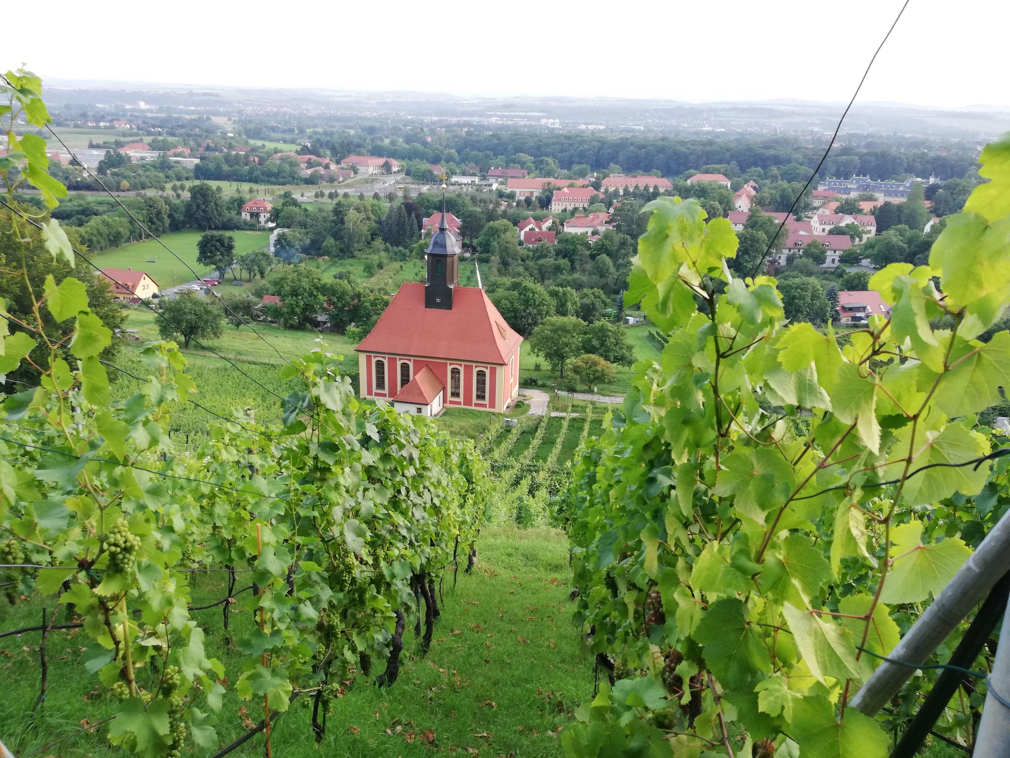 Rückblick: 13. Abendtour zum königlichen Weinberg nach Pillnitz