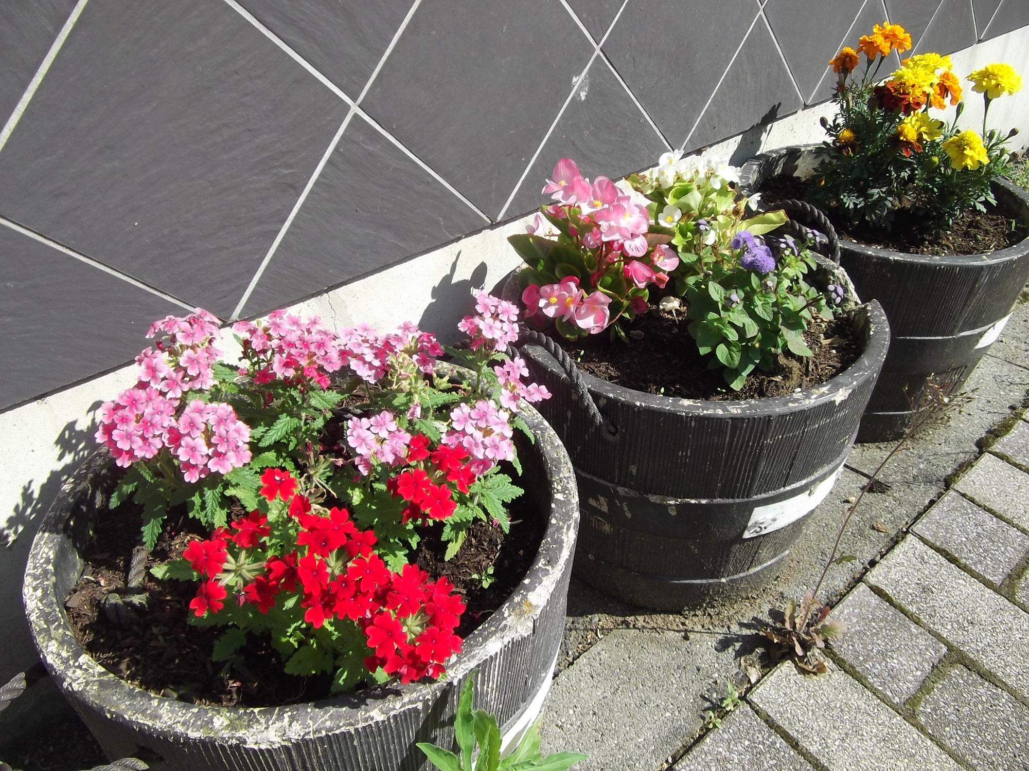 商店街の花