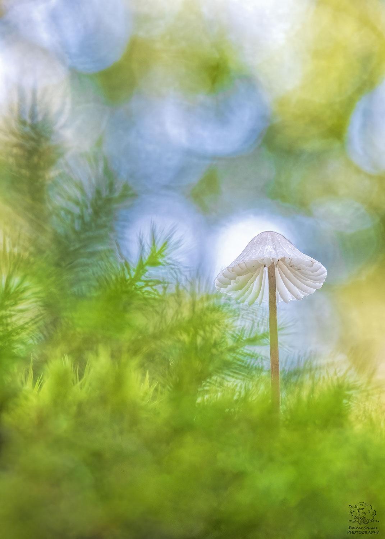 Pilze im Wald ...
