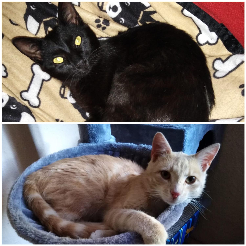 Emil & Otis suchen ein Zuhause