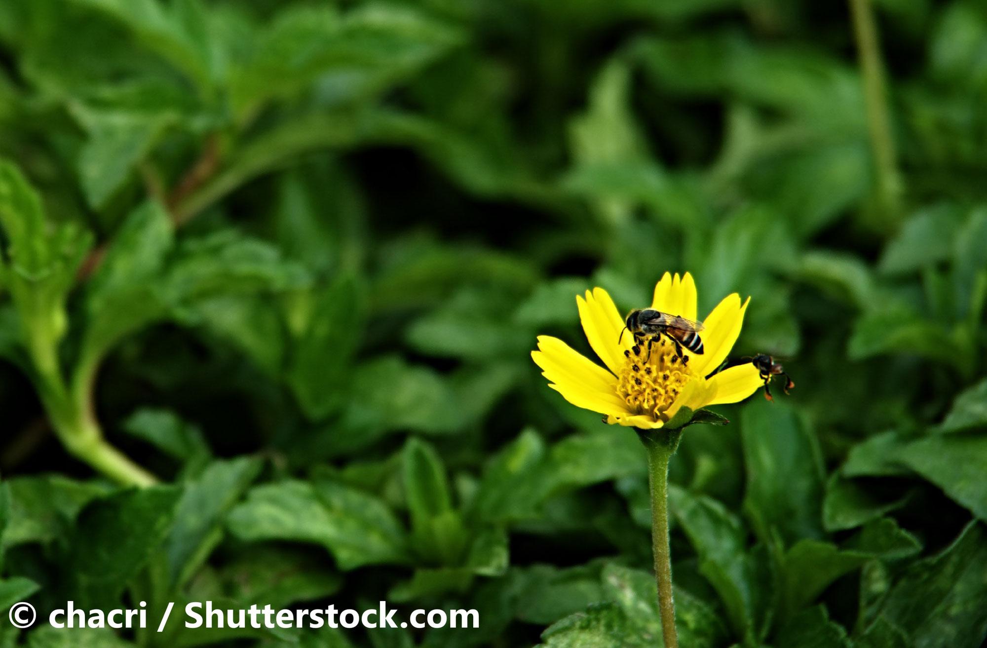 5 gute Gründe für die Rettung von Insekten