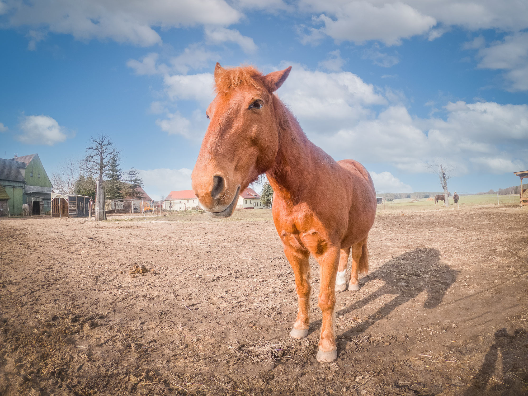 DRINGENDER AUFRUF von Pony Max Muffin zur Unterstützung für die Ponyfarm Schönteichen!