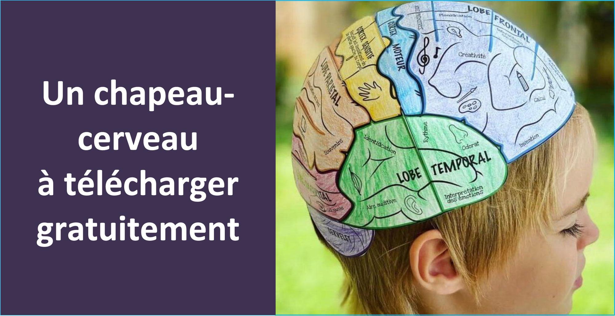 CHAPEAU-CERVEAU à construire pour mieux connaître les aires du cerveau et leurs fonctions
