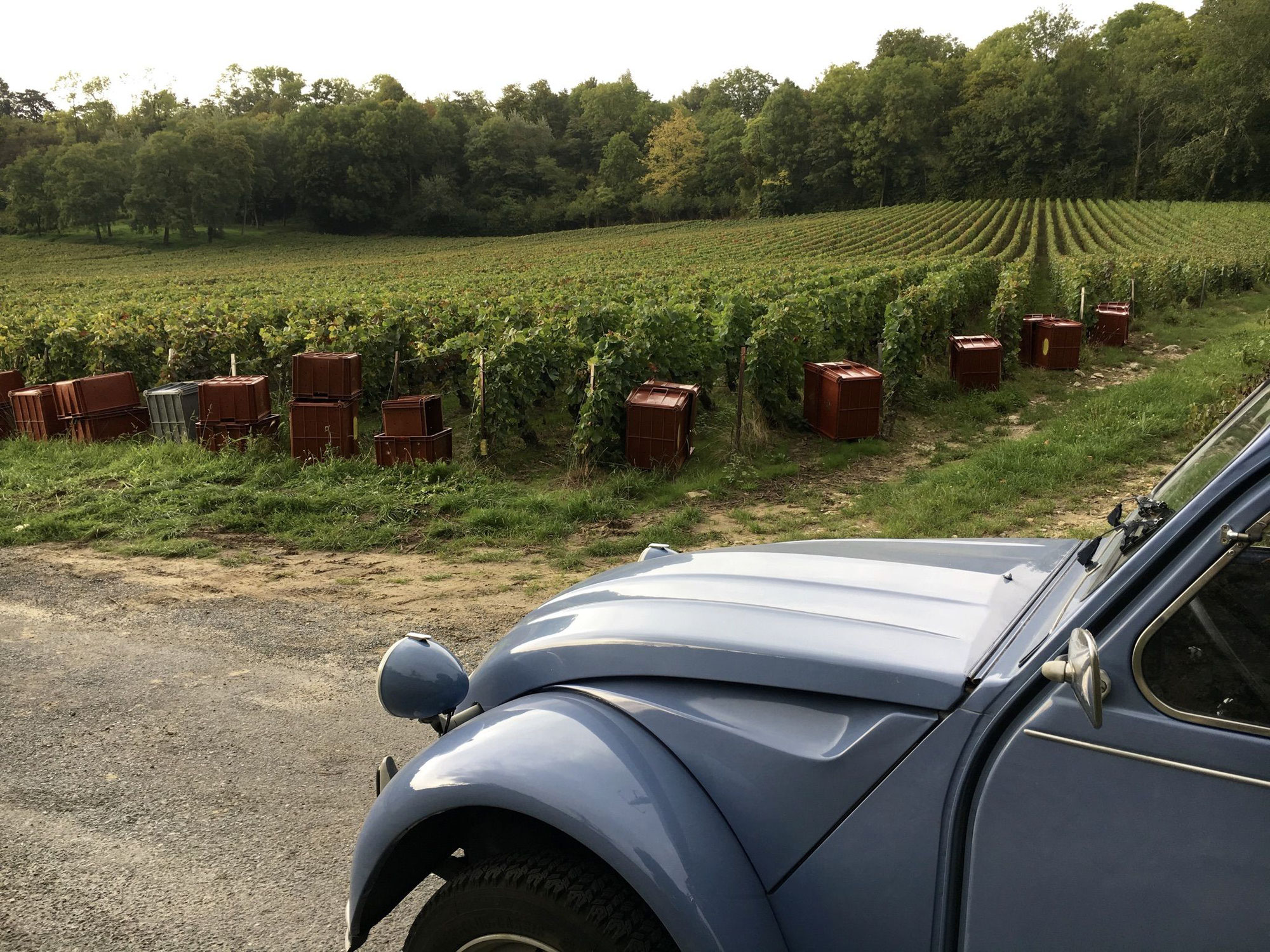 Rallye 2 CV dans les vignobles bordelais