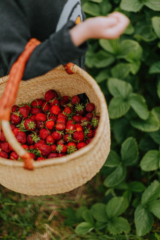 Plant based Food – der Ernährungstrend der Zukunft