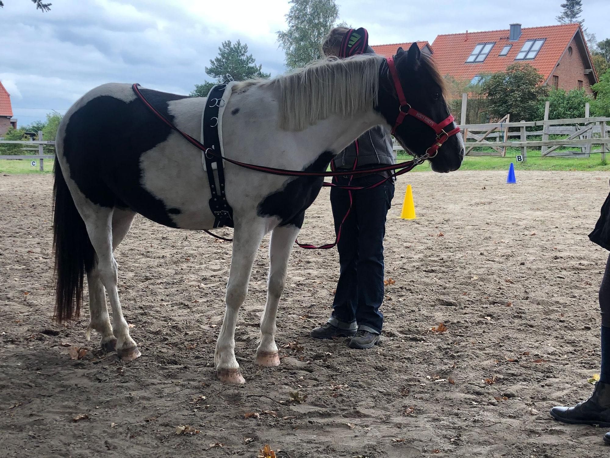 Gruppen Training bei Hannover