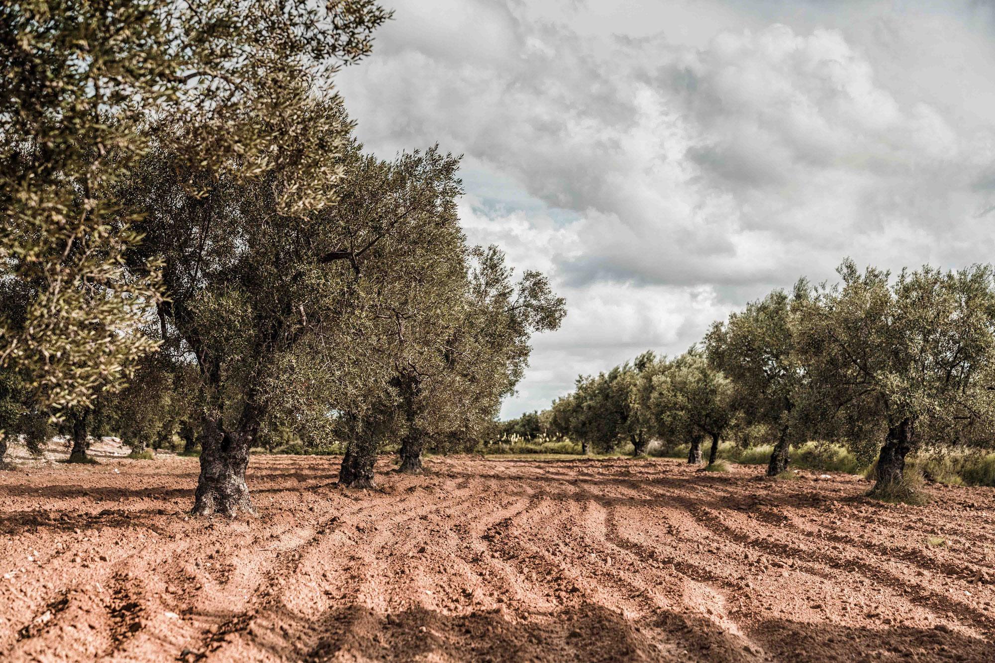 Reiseblog Tunesien #12
