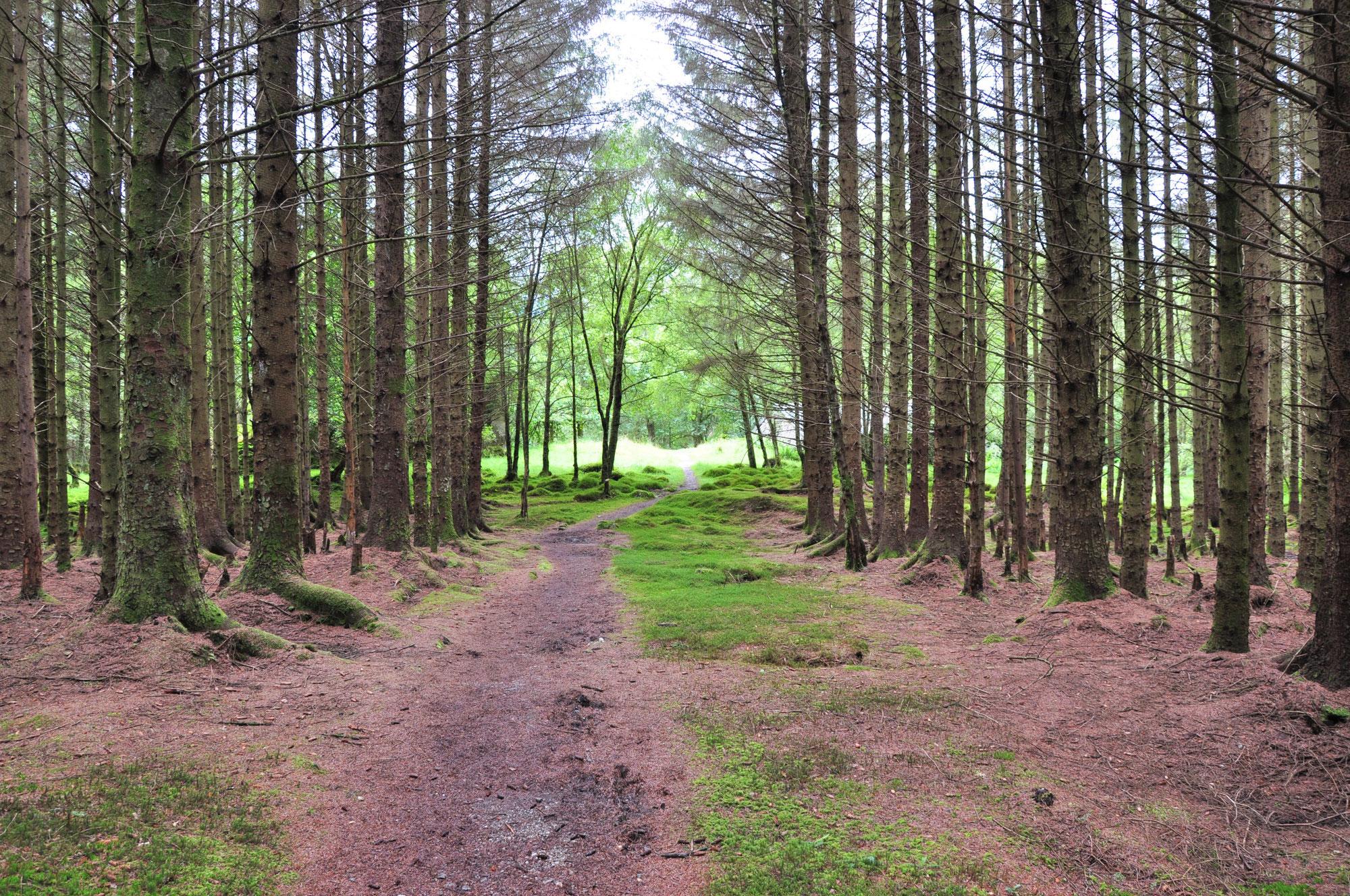 Betuska und die Waldfee (Tschechien)