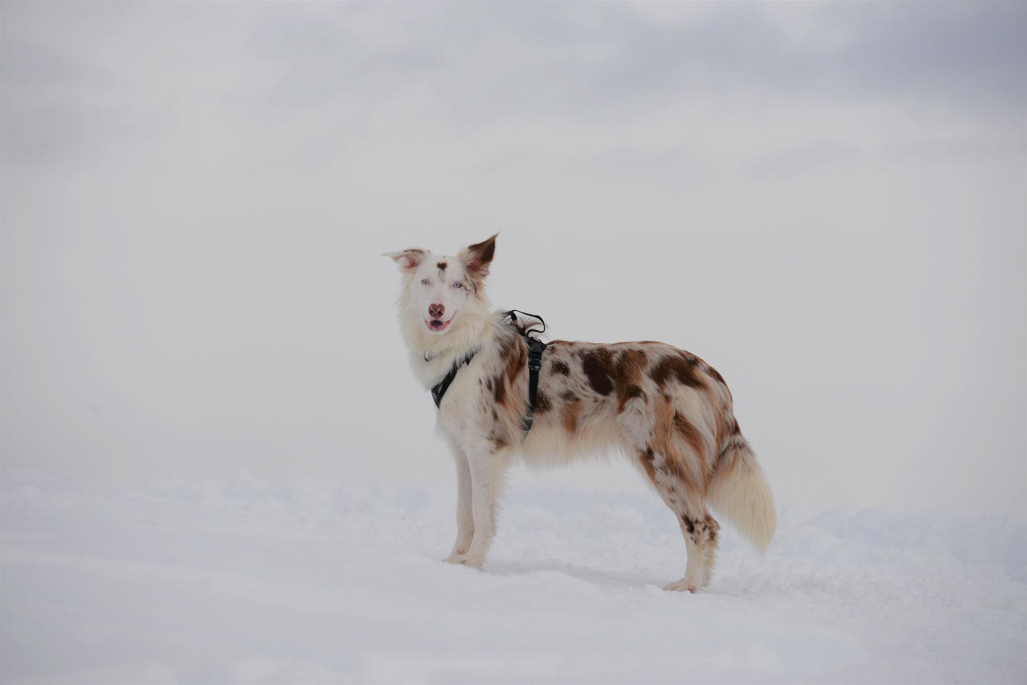 Vom alten Hund und vom Wolf (Ukraine)