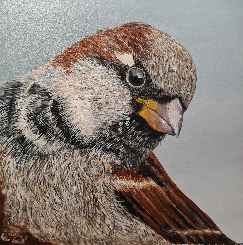 Frecher Wintergast am Vogelhaus