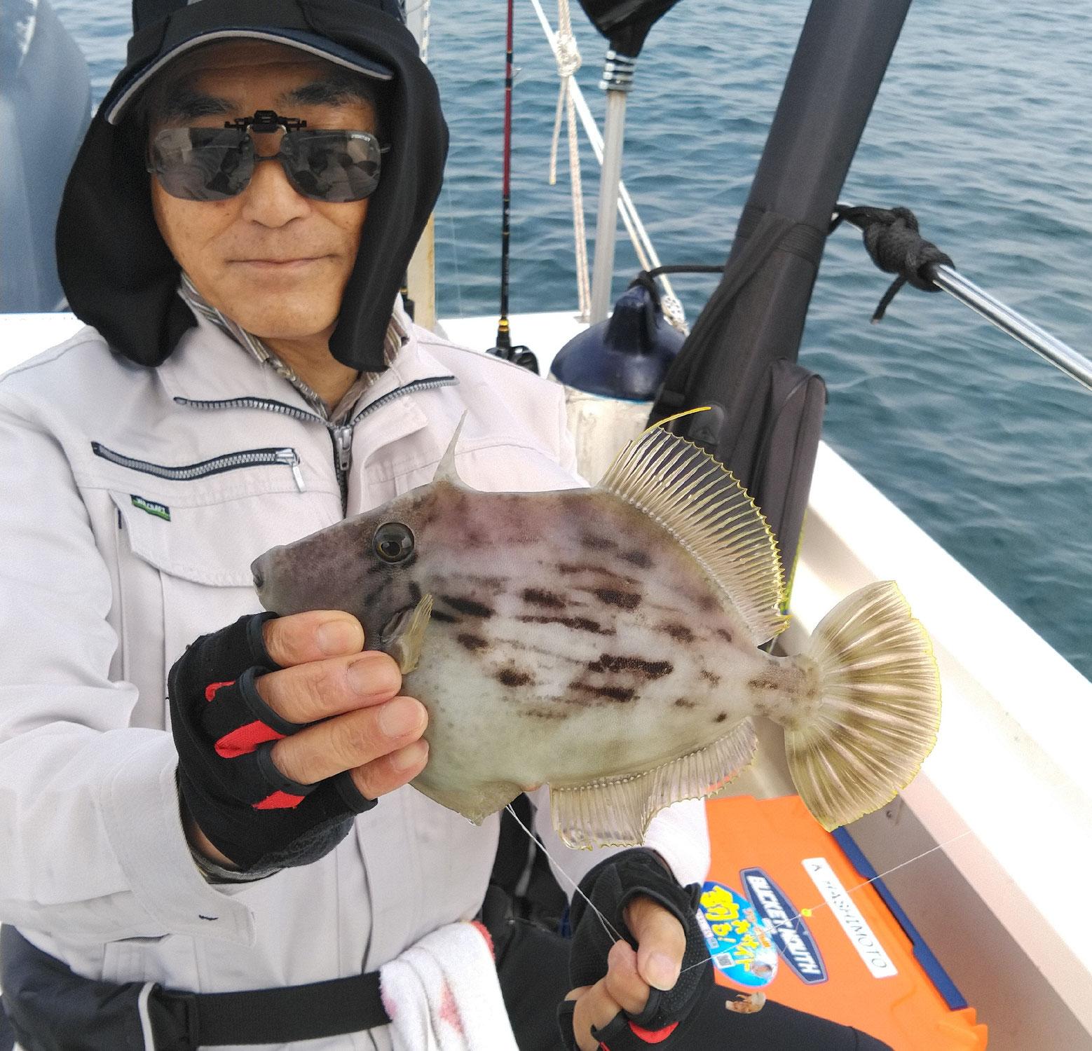 6月12日 カワハギ釣果