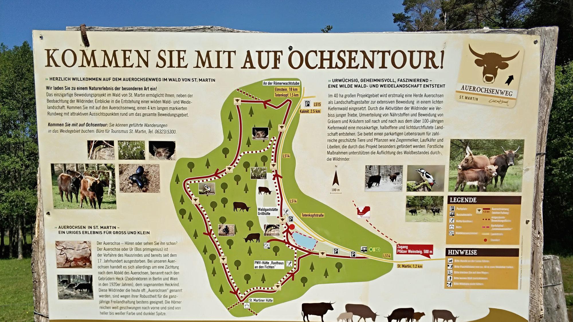 Auerochsen Tour in St. Martin