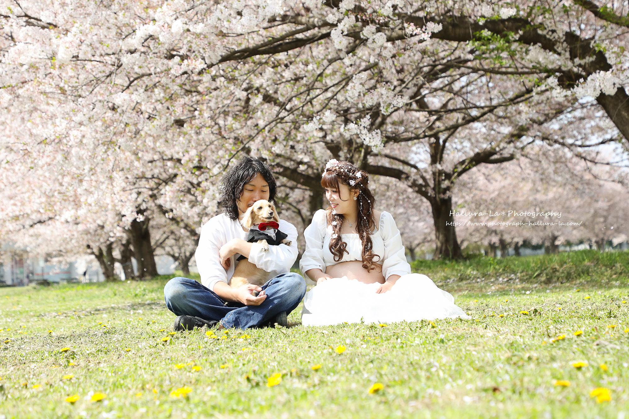 桜の木の下でマタニティフォト