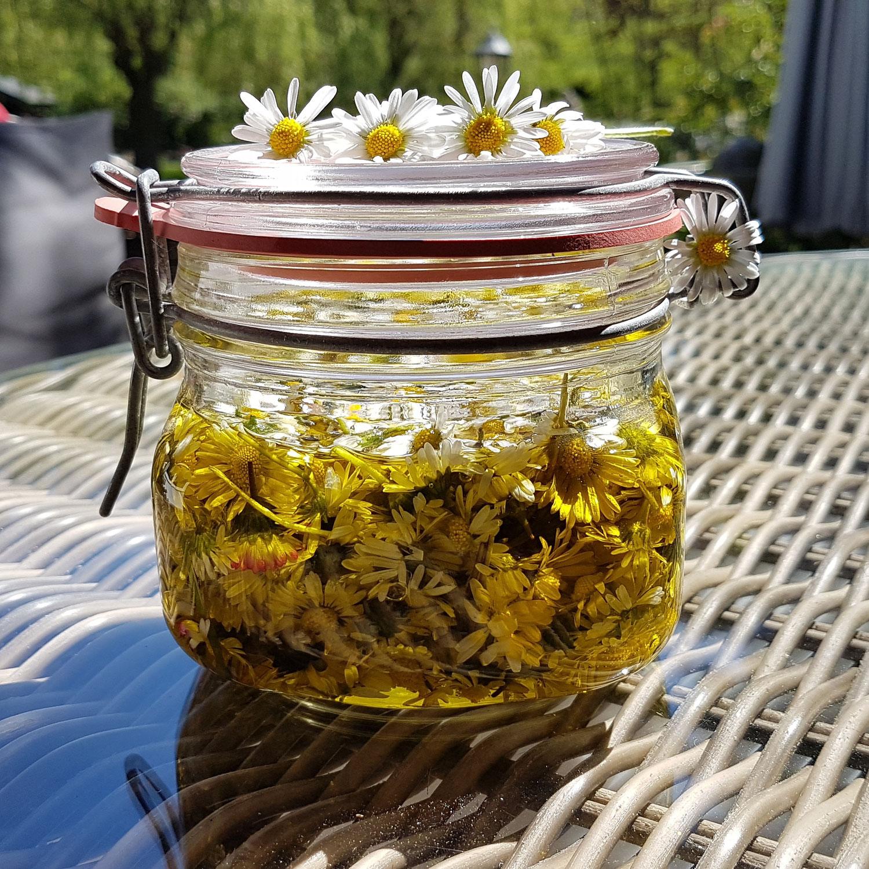 Das Gänseblümchen – ein kostbares Rasen(un)kraut