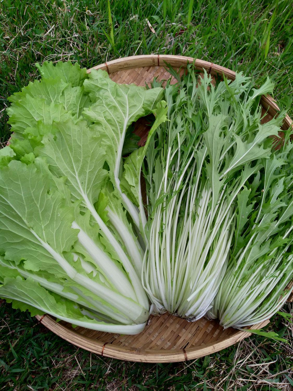 野菜セット2021