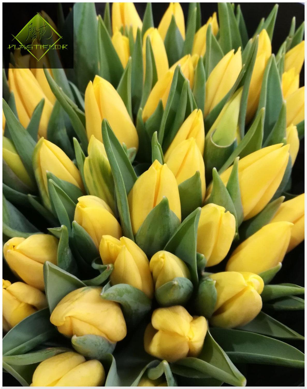 Comment faire durer mon bouquet de tulipes ?