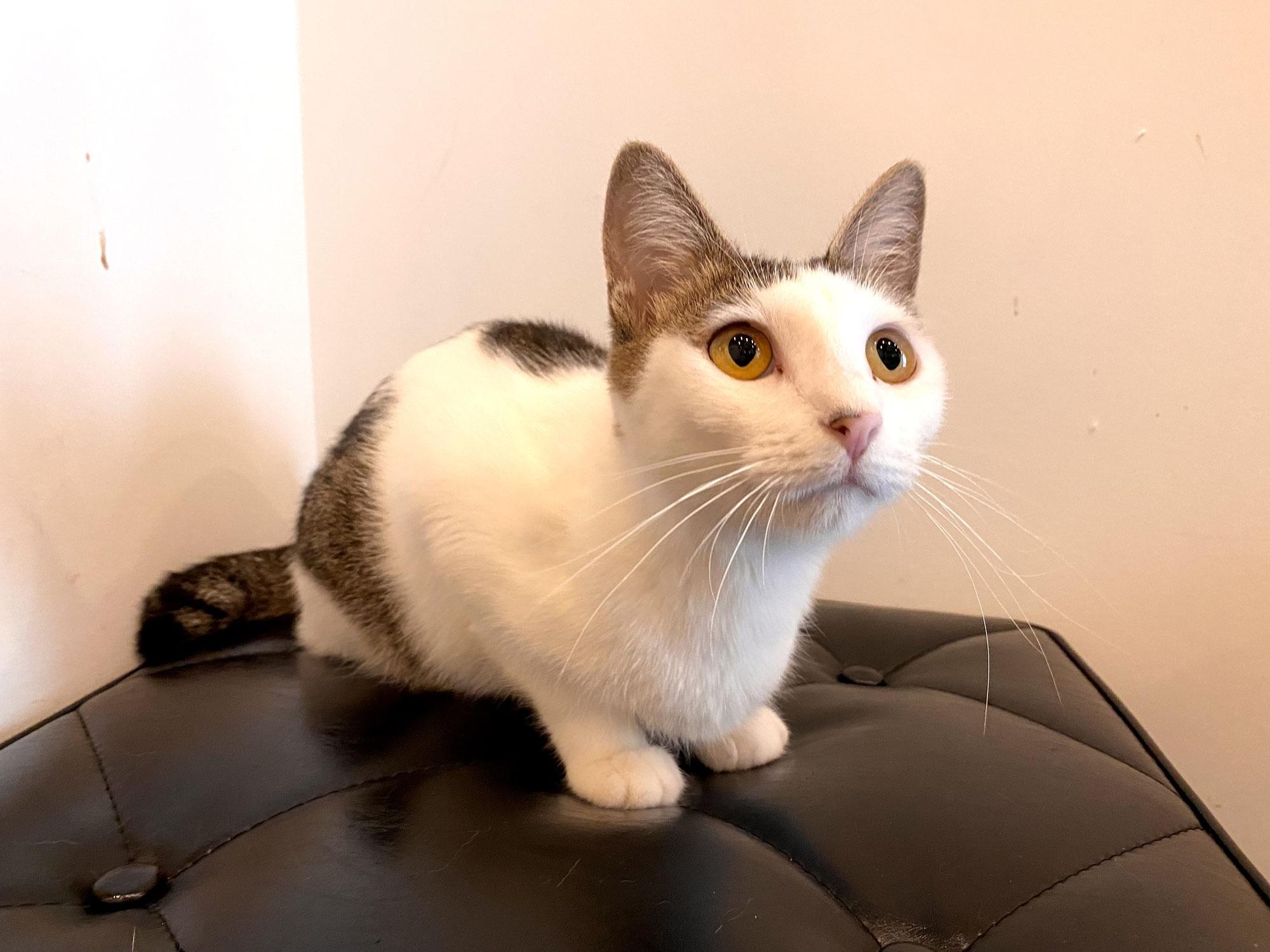 新入り猫さん!ヴィアちゃん!