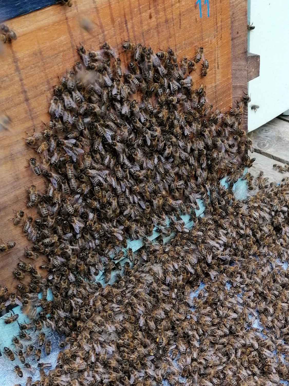 La procession des abeilles