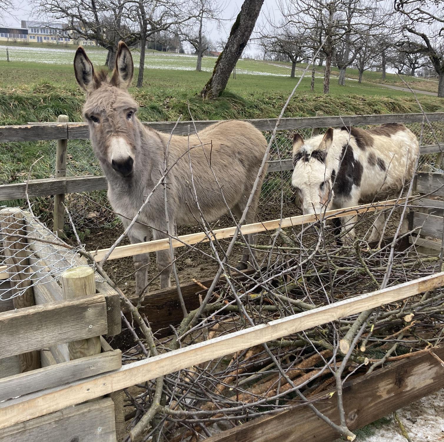 """Neue """"Snackbar"""" für unsere Esel"""
