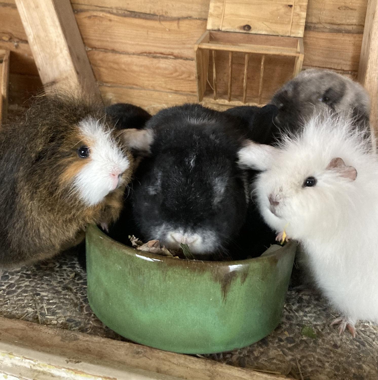Winterliche Aromatherapie für unsere Kleintiere